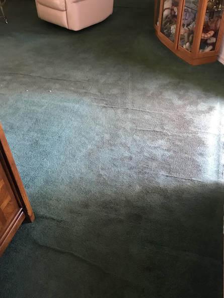 Carpet, Tile/Grout, Upholstery